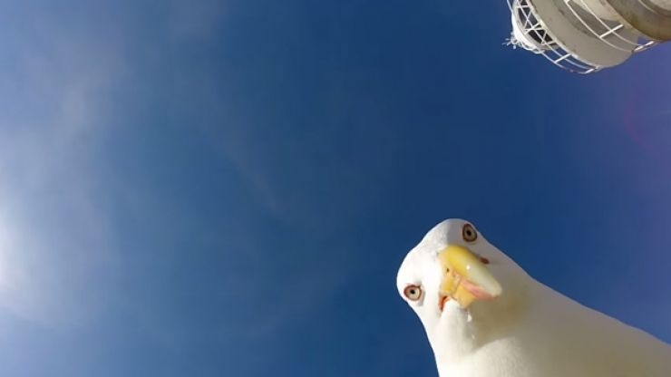 VIDEO: Hilarious footage of the moment this seagull stole a guy's GoPro
