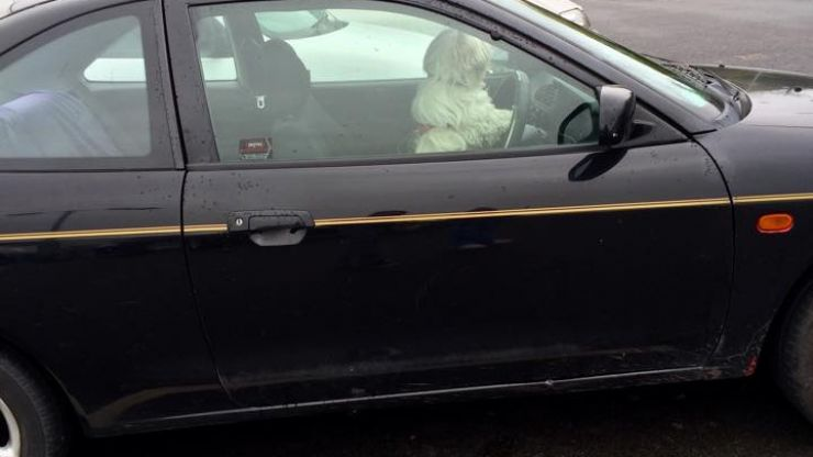 PICS: This dog tried to get behind the wheel of a car in a Cavan car park