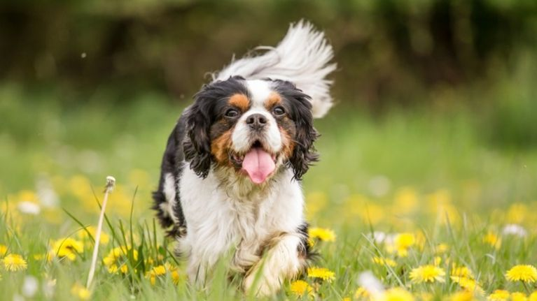 Does Your Dogs Name Feature In The Top 20 Most Popular Dog Names Of