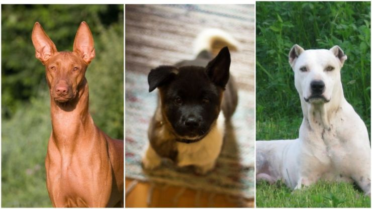 The hardest dog breed quiz you'll take today