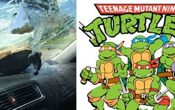PICS: Rogue turtle flies through car windscreen before walking away unscathed