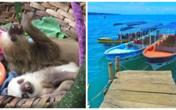JOE Backpacking Diary #9 - Meeting baby sloths, a visit to A&E and finding Panama's paradise beaches