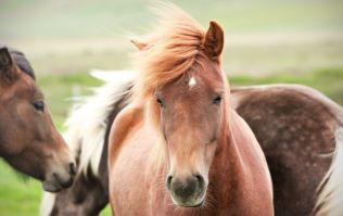 Two Galway hotels are having a horse pun-off for the Galway Races on Twitter and it is magnificent