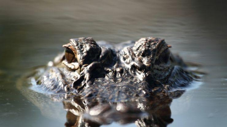 "US police warn of ""meth-gators"" if people flush drugs down the toilet"