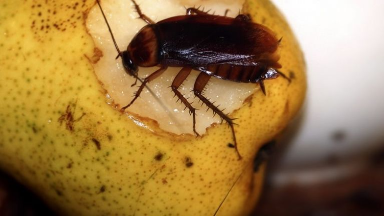 Householders warned to be extra vigilant as cockroach infestations rise by 134% nationwide