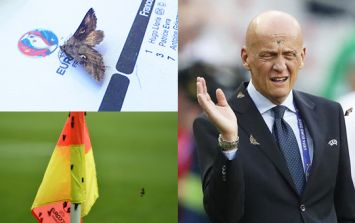 Moth infestation swarms Euro 2016 final... because they stupidly left the lights on