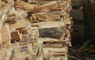 PIC: You will not be able to find the cat hidden amongst these logs