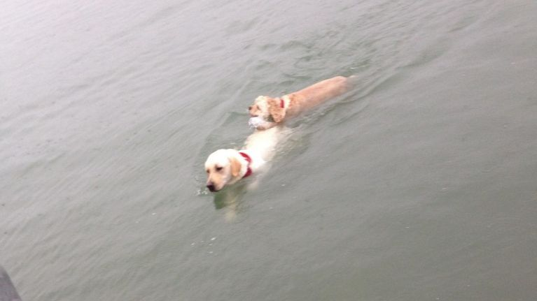 PICS: Dog swims out to sea to rescue his blind friend