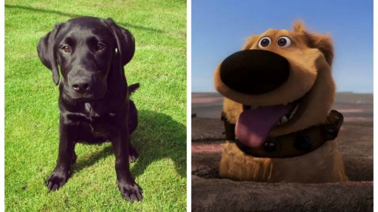 You can now use Snapchat to make your dog look like Dug from Disney Pixar's Up