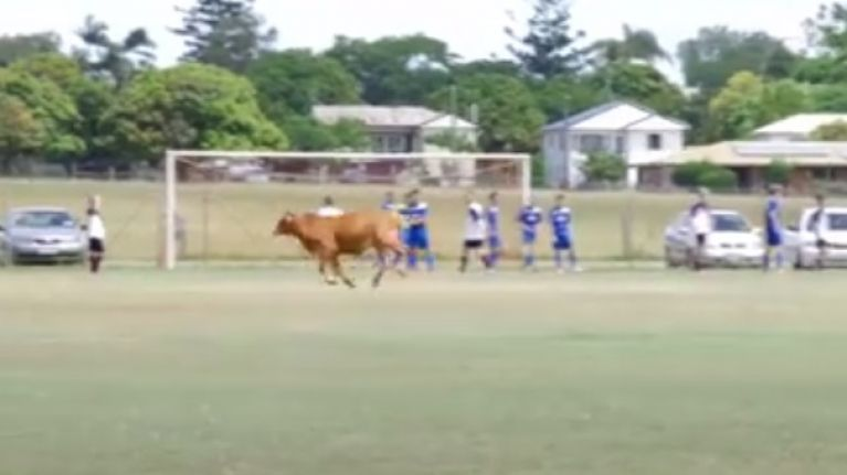WATCH: This Bull invading a football match in Australia is