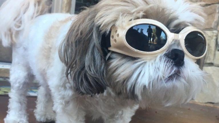 baf3df75181 PICS  This dog has bad eyesight
