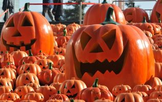 New York Times ranks Irish city as one of the top 6 places in the world to celebrate Hallowe'en