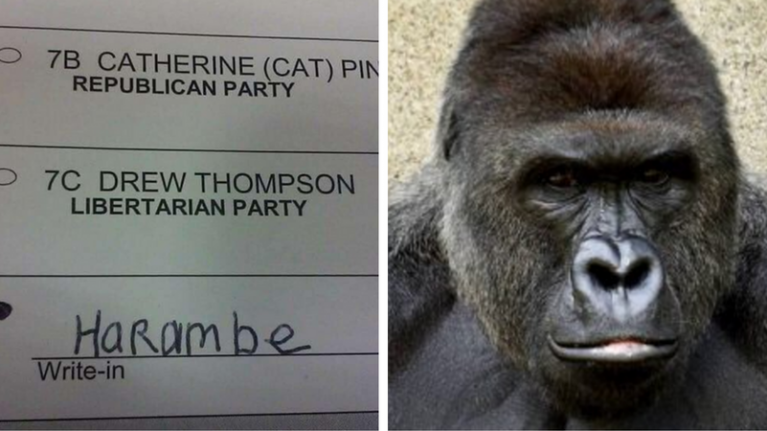 thousands of americans voted for harambe and now people are