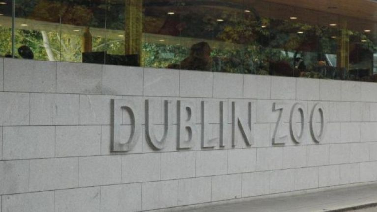 Great news because it's free admission for kids to Dublin Zoo for the next two weeks