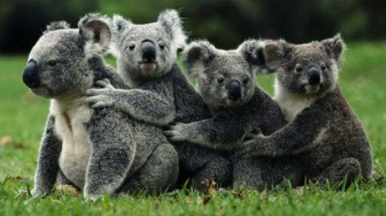Do you like hugs? Good news! There is a cuddle party happening in Ireland this weekend