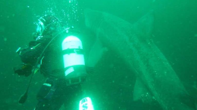 WATCH: Amazing footage of scuba divers' encounter with basking sharks in Mayo