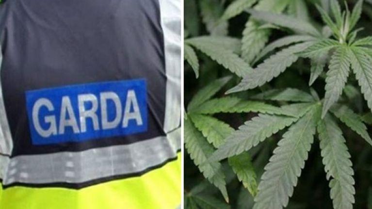 Leitrim growhouse raided as Gardaí seize €200,000 of cannabis