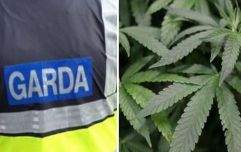 """Gardaí make seizure from """"highly sophisticated grow house"""" in Monaghan"""