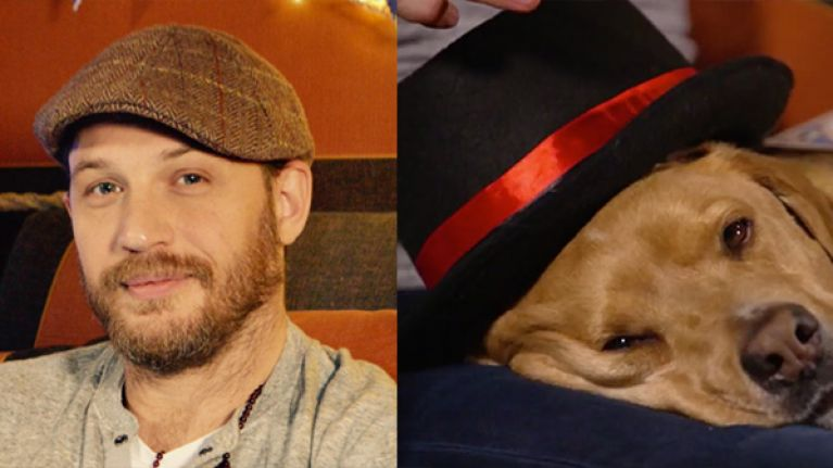 Tom Hardy (and his dog) nearly saved 2016 with CBeebies appearance