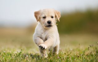 Dog owners can take 'paid puppy leave' at this company