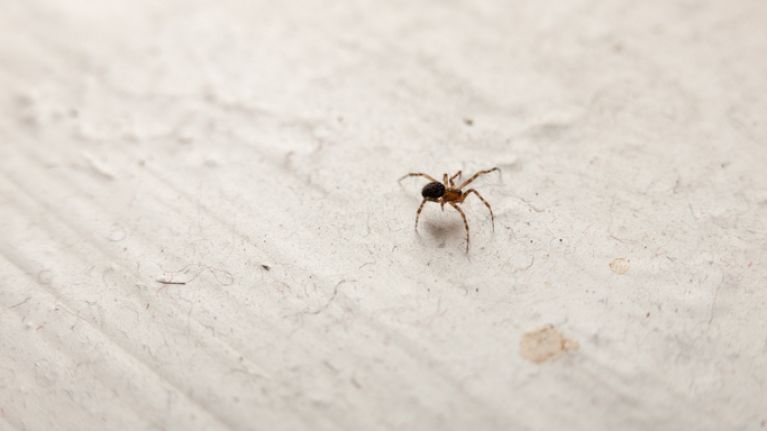 This simple hack will make sure you never see a spider in your home again