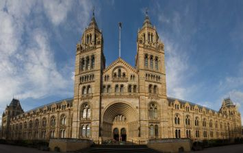 A car has hit several people outside the Natural History Museum in London