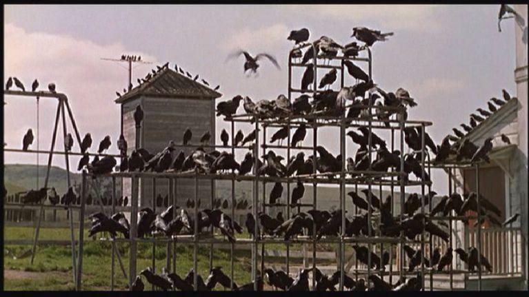 31 Days Of Hallowe'en: The Birds (1963)