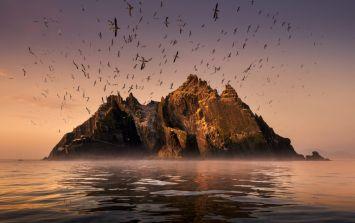 Irish wildlife film beats Planet Earth 2 to prestigious documentary award