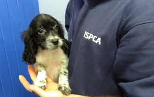 ISPCA issues urgent plea for support as reports of animal cruelty reach all-time high