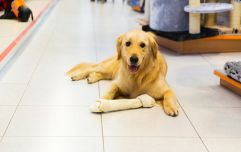 US Government watchdog warns dog owners about health threat posed by 'bone treats'