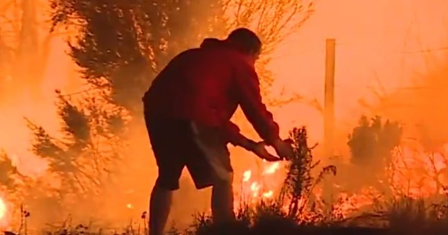 WATCH: Man pulls over to save rabbit from roadside as fires blaze in California