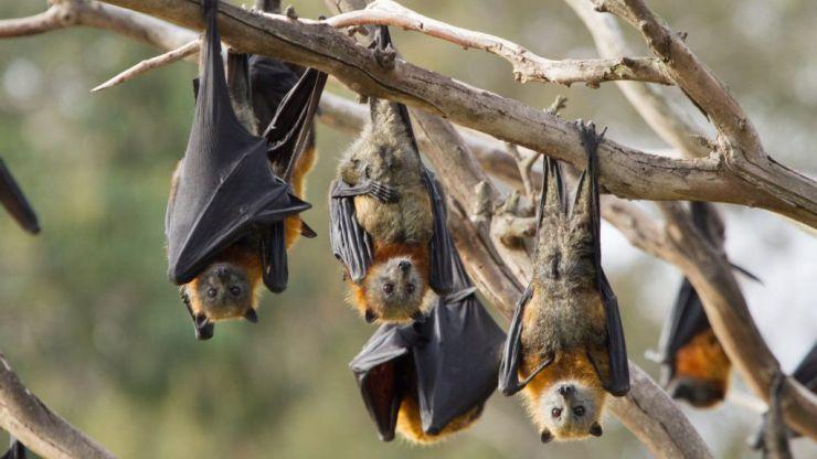 WATCH: Aussie town terrorised by 'plague' of 200,000 bats