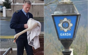 A member of the Gardaí had an altercation with a swan in Dublin on Friday morning