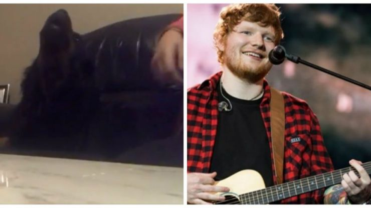 WATCH: Irish dog singing along to Ed Sheeran is the shot of happiness you need today