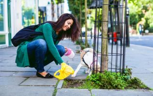 Cork mayor says people on social welfare should do jobs like cleaning up dog dirt for payments