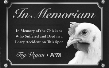 PETA ask Waterford Mayor to erect memorial plaque for chickens killed in motorway accident