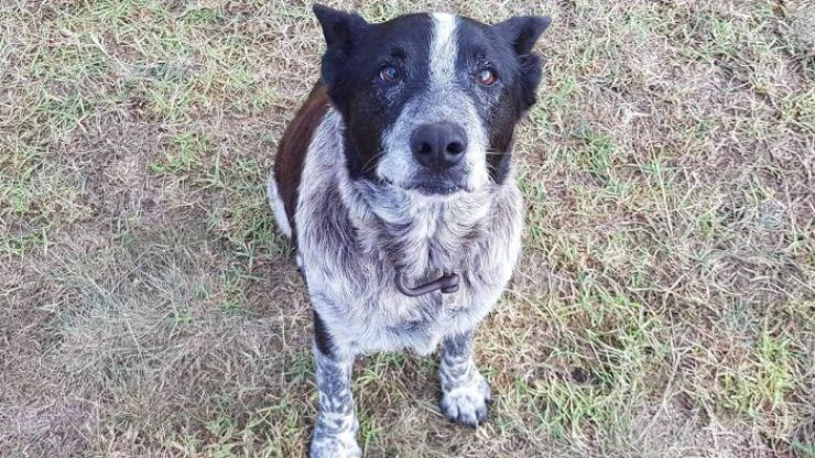 Partially deaf and blind dog leads rescuers to his missing three-year-old owner