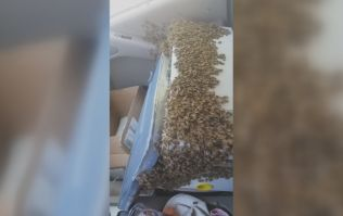 WATCH: Package filled with 3,000 bees breaks open in truck, driver remains unbelievably calm