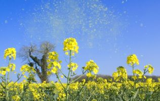 Expert shares the best tips to avoid hayfever as pollen season arrives in Ireland