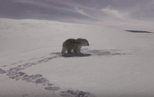 """Paddy Power issue """"apology"""" over that polar bear World Cup advert"""