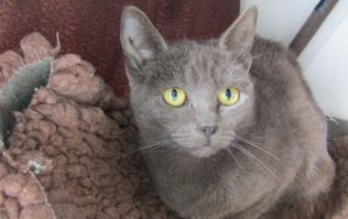 The ISPCA are looking for homes for 44 cats taken from Meath