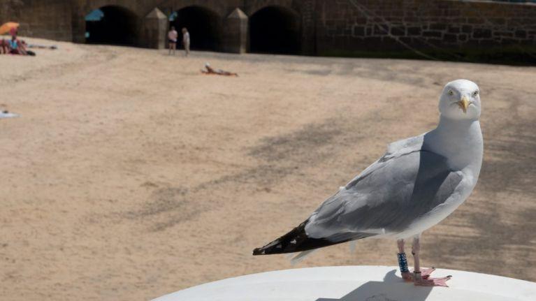 Influx of seagulls in hot weather wreaking havoc in north