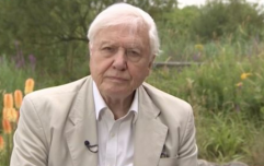 David Attenborough's interview with the BBC is absolutely riveting car crash TV