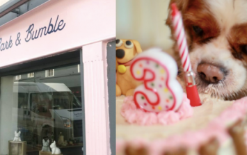 Cork is getting its first ever dog friendly cafe and it opens this week