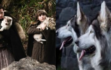 Dublin will have a Game of Thrones convention where you can meet the actual Direwolves from the show