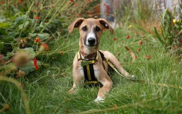 Dogs Trust is looking to recruit puppies for 'Generation Pup' research