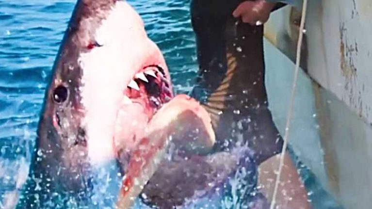 2019 will have its own killer shark movie, but it has already made one huge mistake