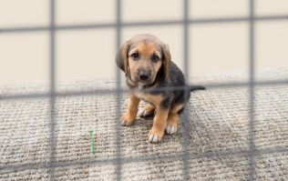 UK bans pet shops from selling puppies and kittens under new law