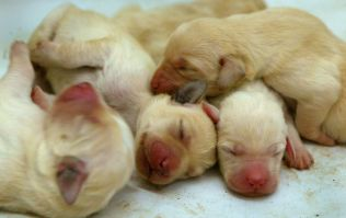 Irish veterinary practice tackling puppy farms head on with 'Puppy Contract'