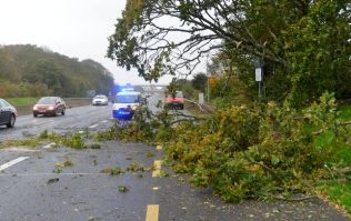 Here are all the roads across the country affected by fallen trees due to Storm Ali